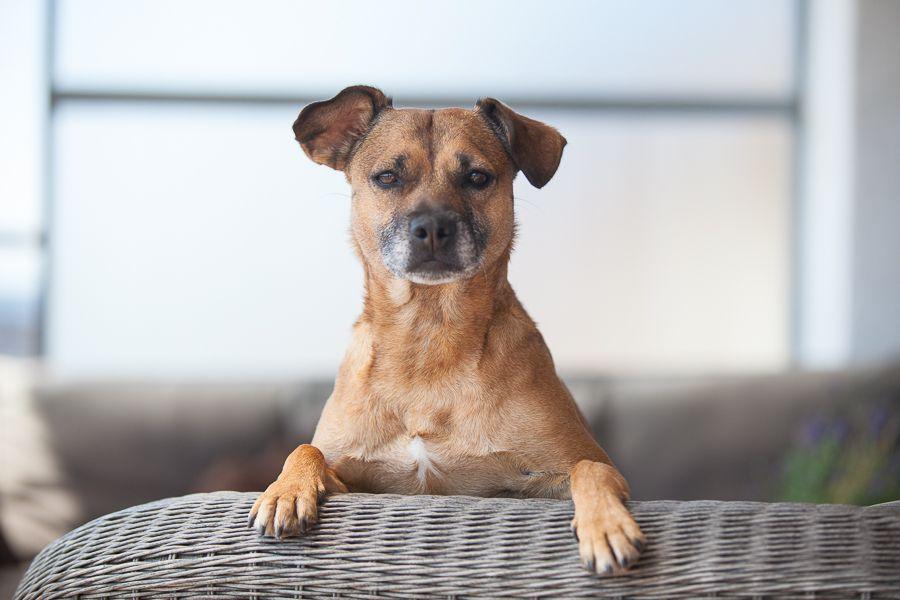Neugieriger Hund im Hundeverhaltenszentrum