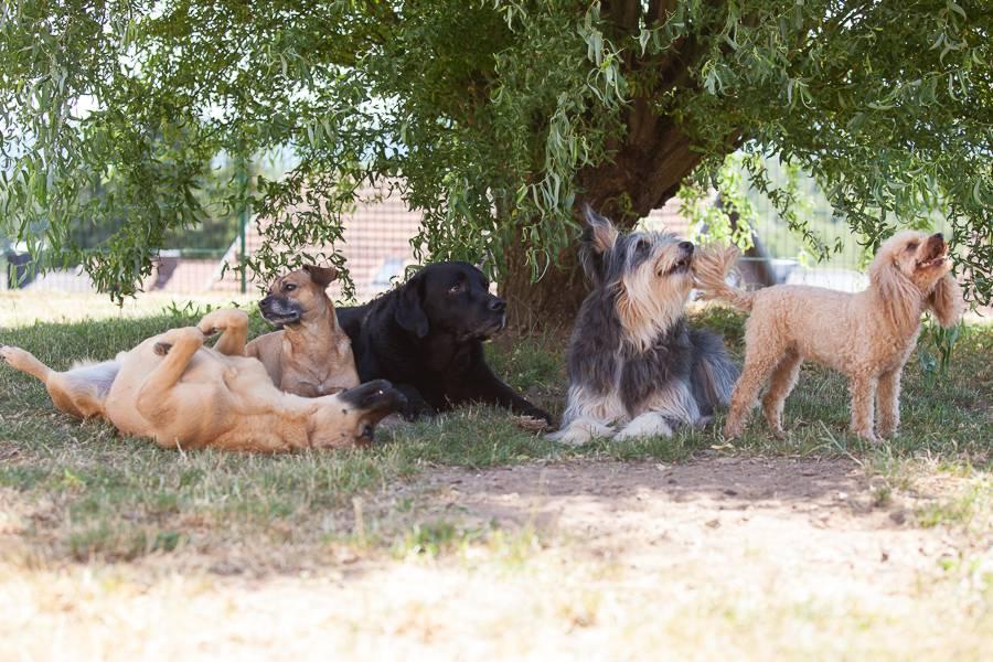 Glückliche Hunde an einem Trainingstag im Hundeverhaltenszentrum
