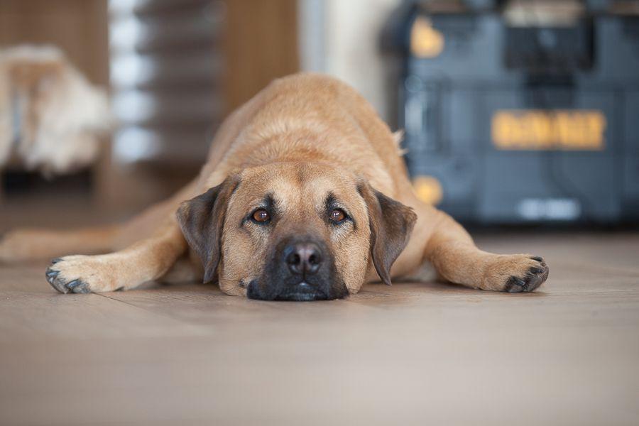 Hund wartet auf sein Training