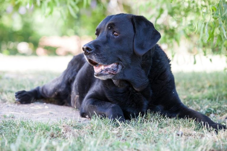 Carlos, Hundeverhaltenszentrum, Grundgehorsam, Impulskontrolle, Training, Spaziergang