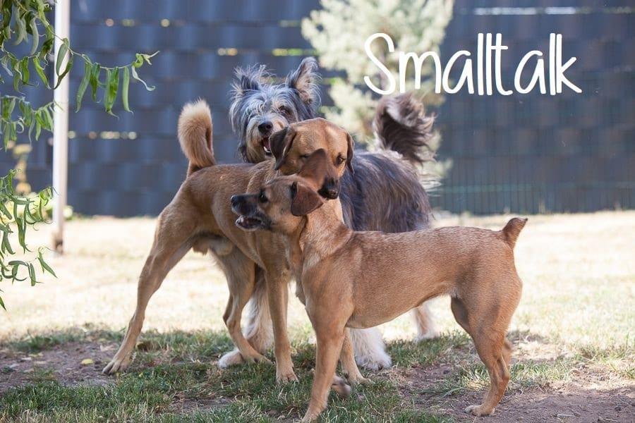 Freilauf, Impulskontrolle, Hundeverhaltenszentrum, Spiel, Spaß, Smalltalk