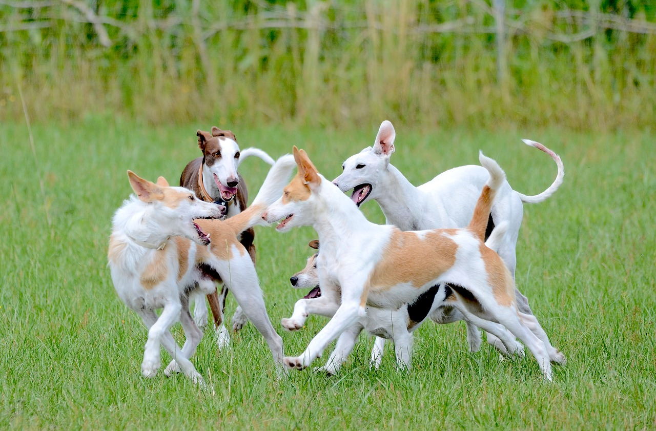 Grundgehorsam, Impulskontrolle, Training, Halbstarke, Hundeverhaltenszentrum