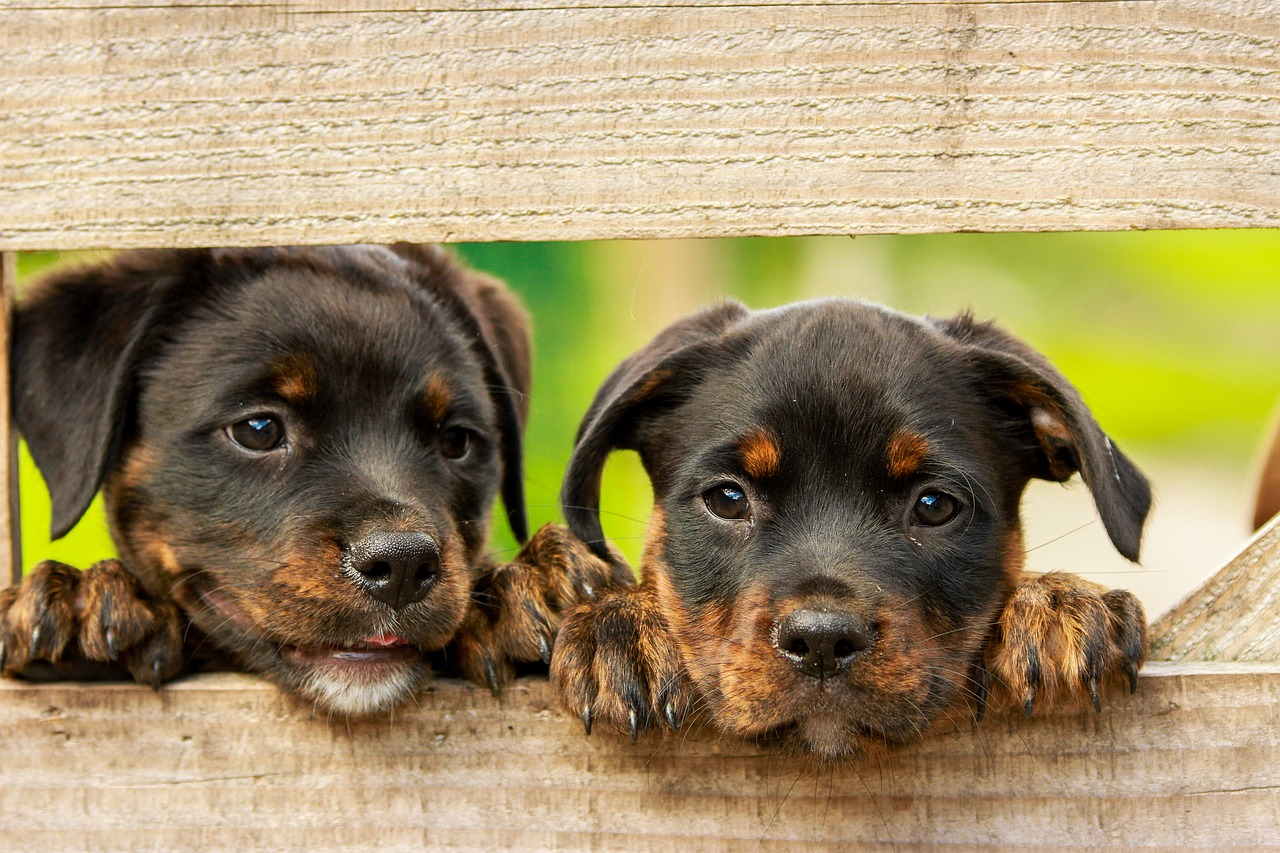 Welpen, Welpentraining, Grundgehorsam, Training, Hundeverhaltenszentrum