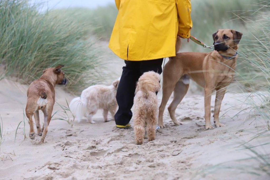 Urlaub, Hundetraining, Strand
