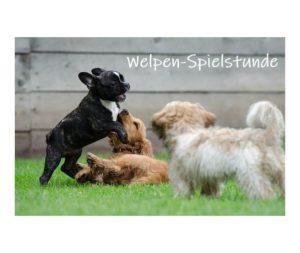 Welpen Spiel, Hundeverhaltenszentrum, Sonntag, Hundeerziehung, Hundekommunikation, Welpengruppe, Erziehung, Hundeschule