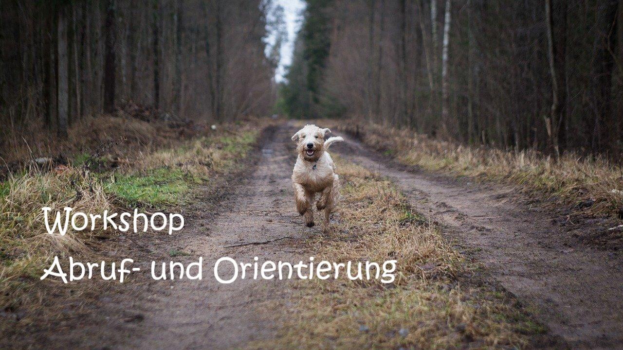 Abruf, Orientierung, Hundeverhaltenszentrum